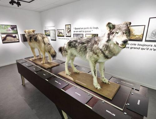 Insolite : visitez le musée du loup