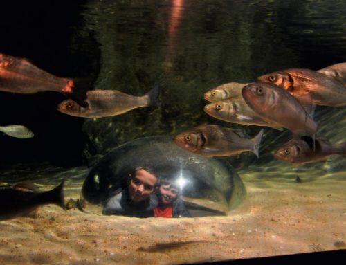 L'aquarium de Trégastel